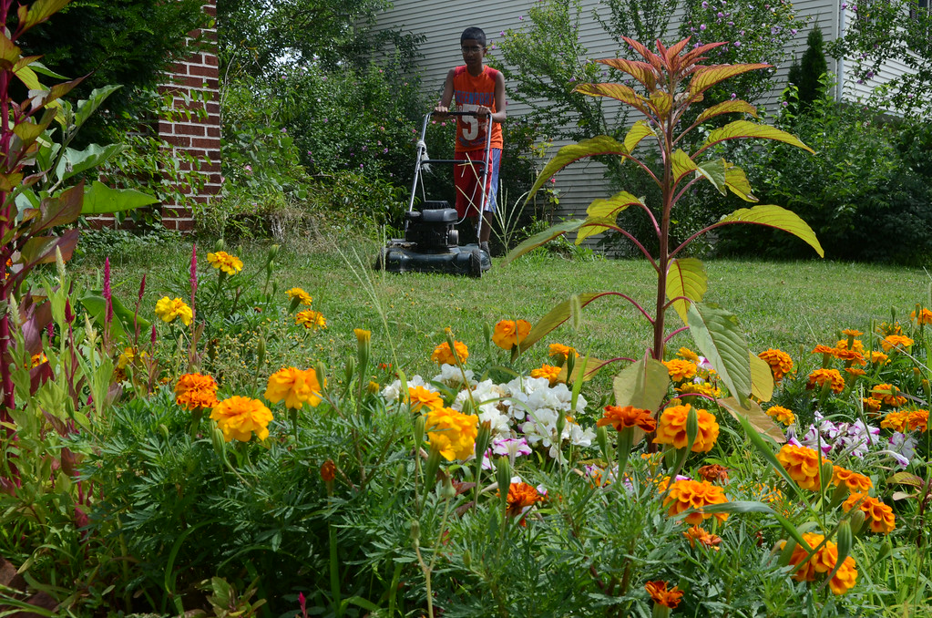Description of . Jawad Ahmed ,14, is seen past flowers in bloom as he mows the lawn in front of his home in Lansdale on Saturday August 2,2014. Photo by Mark C Psoras/The Reporter