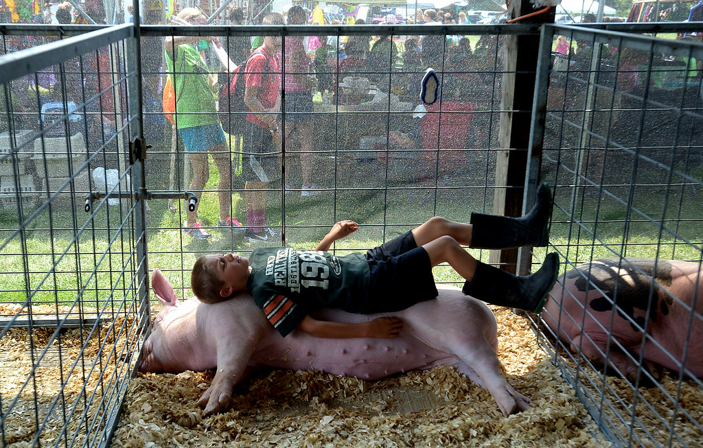 Description of . Blaine Leister, Telford, taking life easy atop his Yorkshire cross breed pig who seems to take no notice at the Montgomery County 4-H Fair in Creamery Friday, Aug. 8, 2014. Montgomery Media staff photo by Bob Raines
