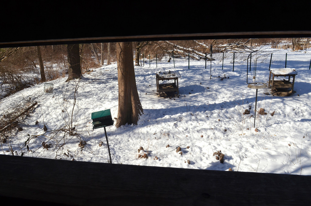. A group of feeders attract birds a few feet from a bird blind at the Peace Valley Nature Center in New Britain Township.   Wednesday,  January 29, 2014.  Photo by Geoff Patton