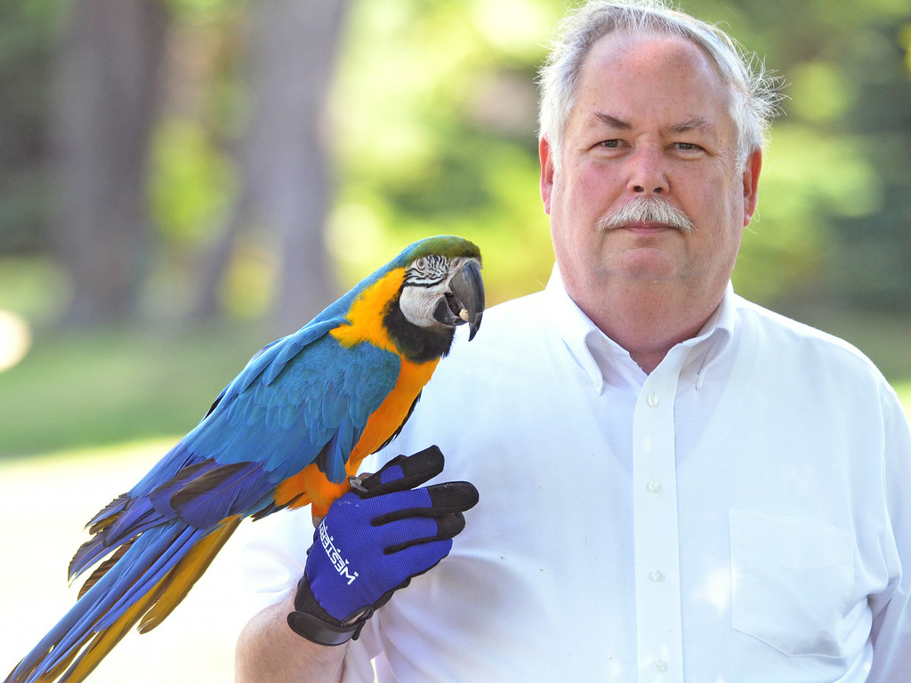 ". A macaw named  ""Admiral Byrd\"" munches on a pistachio while on a walk along Seventh Street in Lansdale with his owner Richard Smith.    Friday, July 25, 2014.     Photo by Geoff Patton"